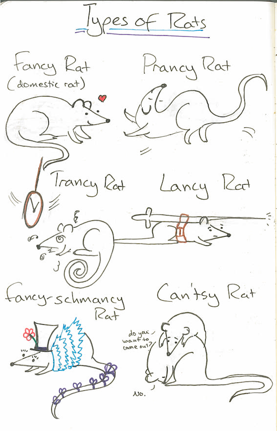 2017-02-17-types of rats